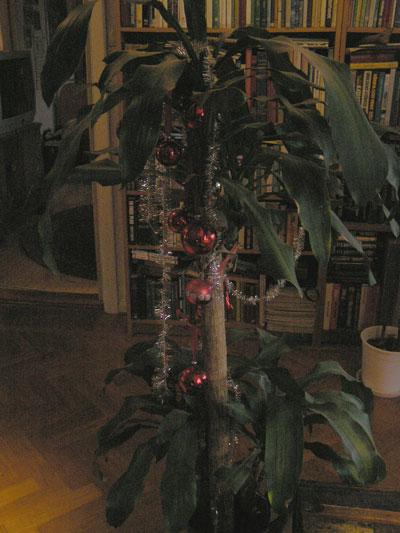 optirz-rotation-of-palmtree.jpg